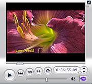 Happy Moose Daylily Videos